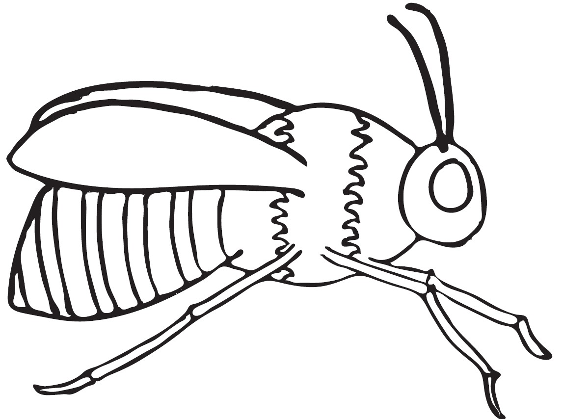 honey bee coloring pages -#main